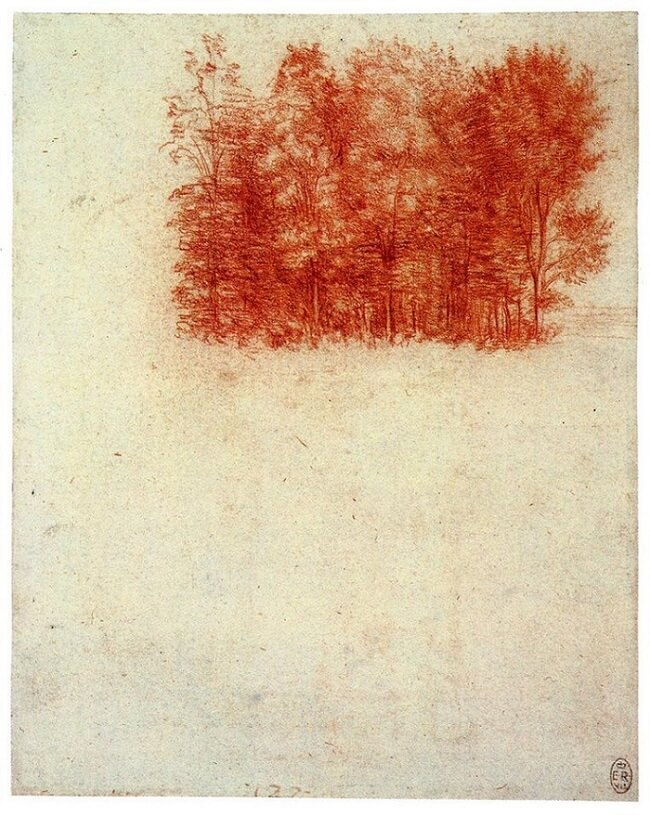 Birch Copse - by Leonardo da Vinci